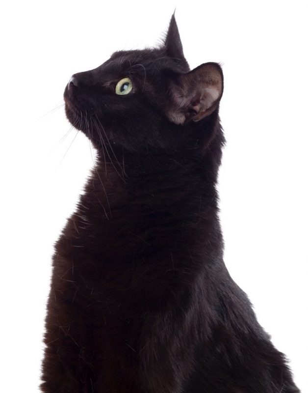 dab3aae8034e Μαύρη γάτα … μια μεγάλη παρεξήγηση! - Gorilaki